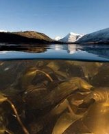 Carburant alternatif : les algues au coeur de la recherche