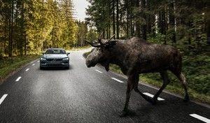 Sécurité routière: une application pour limiter les accidents avec les animaux