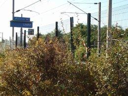 Des clôtures végétales pour des gares !