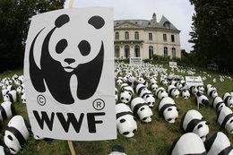 Lutte contre le réchauffement climatique : 1 600 pandas ont manifesté !
