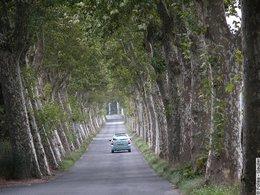 Question du jour n° 91 : pourquoi y-a-t-il tant de platanes le long des routes ?