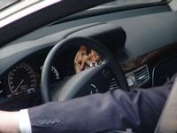 Sujet chaud : Que font les chauffeurs de maître lorsqu'ils attendent dans leur voiture?