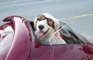 Insolite : Une remorque moto qui a du chien !