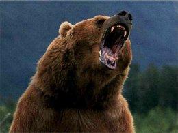 Question du jour n° 153 : quel grizzly a été vice-champion du monde des rallyes ?
