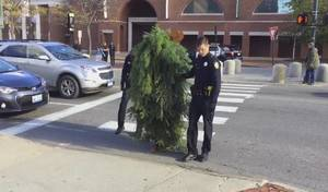 Insolite : il bloque la circulation déguisé en arbre