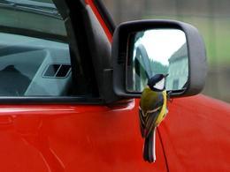 Respecter la vitesse pour protéger les oiseaux