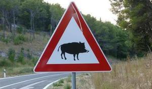Assurances: que faire si l'on percute un animal sauvage?