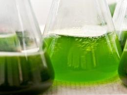 Des chercheurs américains mettent au point du biocarburant grâce à des microbes