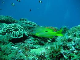 Shell envisage de nouveaux forages offshores mettant en danger la barrière de corail australienne