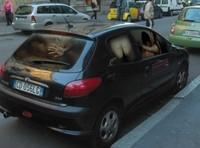 Une orgie dans votre voiture? C'est possible..