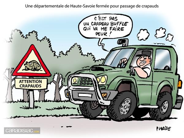 Le dessin du jour danger invasion de crapaud buffle - Dessin de crapaud ...