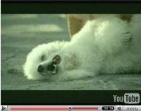 La vidéo du jour : publicité Bridgestone, une vie de chien !