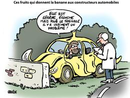 Le dessin du jour - Mise au point d'un plastique renforcé à base de banane