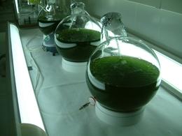 Une augmentation de la production de biocarburant pourrait tuer 200 000 personnes chaque année