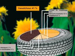 (Minuit chicanes) Les pissenlits seraient-ils l'avenir du pneu?