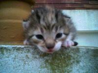 Miraculé : un chaton caché dans le moteur est retrouvé sain et sauf