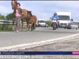 23 chevaux courent sur l'A36 et bloquent la circulation