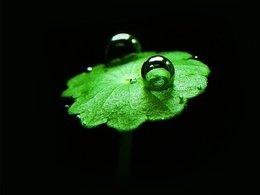 Du biocarburant sera produit à partir d'algues au Canada