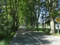 Sécurité routière - Abattage de platanes, la guerre est déclarée