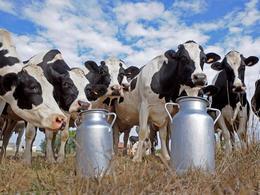 Les vaches fourniront-elles le carburant de demain ?