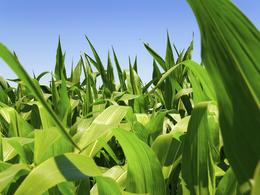 En 2050 les biocarburants pourraient représenter 27% des carburants utilisés sur les routes