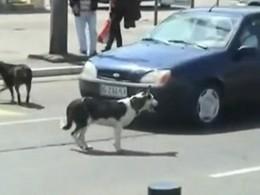[Vidéo] Méfiez-vous des chiens à coté de la plaque