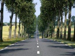 Sécurité routière : vers la fin des arbres le long des routes ? [MAJ : Interview de Chantal Pradines, experte au Conseil de l'Europe]