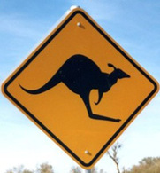 Le Kangourou fugueur écrasé par une voiture