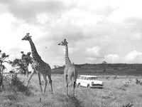 La stratégie de General Motors en Afrique