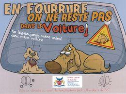 «En fourrure, on ne reste pas dans la voiture» : les recommandations de la SPA