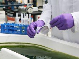 Biocarburants à partir d'algues : des nouvelles sur les recherches d'Exxon Mobil et de Synthetic Genomics