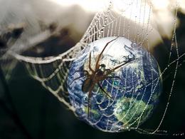 Etude : la toile d'araignée est un filtre à pollution efficace