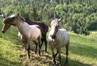 45 chevaux disparus : un 4x4 en récompense