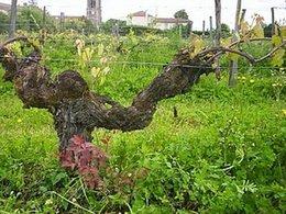 Tourisme durable : l'Écotour à Bordeaux