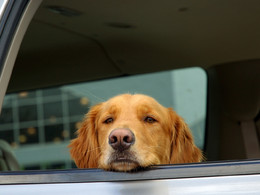 Aux USA : briser les vitres d'une auto pour sauver une vie est maintenant légal