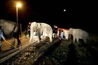 Accident de la route en Suède, un vrai cirque