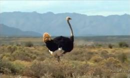 Vidéos : Smart se moque des bêtes