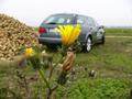 Saab 9-5 Biopower : l'essai avec de l'E85 !
