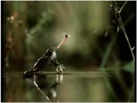 La vidéo du jour : la grenouille de Volkswagen