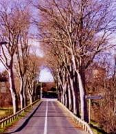 Canada : des arbres pour sauver des vies
