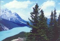 Canada : un sondage fictif sur un allègement fiscal écolo