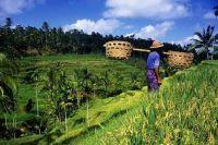 Indonésie : les biocarburants, une solution économique face à la pauvreté