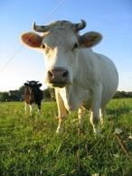 Salon de l'agriculture : quel avenir pour l'agriculture française et les biocarburants ?
