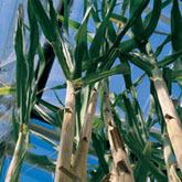 Un marché mondial des biocarburants en route : producteurs et consommateurs embarqués