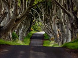 Les arbres au bord des routes, victimes injustes de la Sécurité Routière ?