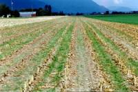 Canada : les investissements pour les biocarburants fleurissent