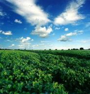 Biocarburant en Argentine : le soja a la cote