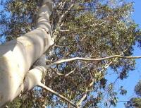 Quels sont les points communs entre un arbre OGM et une voiture ?