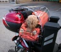 Trucs et astuces n°15 : Transporter le chien