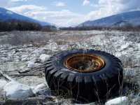 Continental : la bionique, quand le pneu rencontre la nature